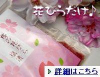 sakurahanabira01011.jpg
