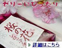 sakurahanasirotupu00111.jpg