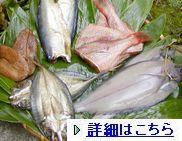 wajima-hi131-1.jpg