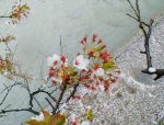 桜も終わりですネ