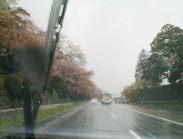 左側の桜が散って、ピンクから花弁の赤色になっています