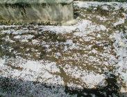 小川は、散った花びらでいっぱい