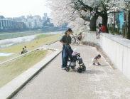 桜の花びらは、たべれないヨ
